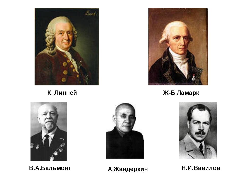 К. Линней Ж-Б.Ламарк В.А.Бальмонт А.Жандеркин Н.И.Вавилов