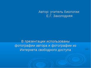 Автор: учитель биологии Е.Г. Заколодняя В презентации использованы фотографии