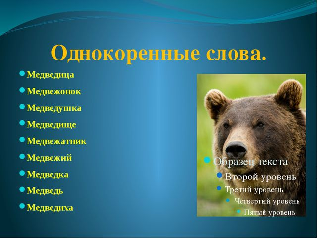 Однокоренные слова. Медведица Медвежонок Медведушка Медведище Медвежатник Мед...