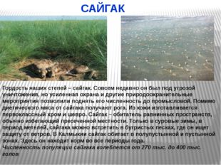 Журавль-красавка Черноголовый хохотун Колпица Розовый пеликан