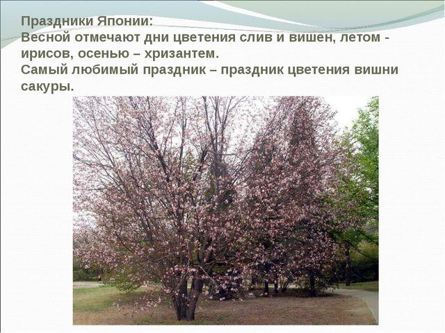 Праздники Японии: Весной отмечают дни цветения слив и вишен, летом - ирисов,...