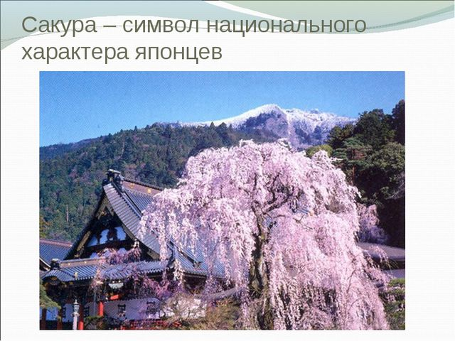 Сакура – символ национального характера японцев
