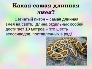 Какая самая длинная змея? Сетчатый питон – самая длинная змея на свете. Длина