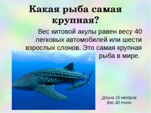 Какая рыба самая крупная? Вес китовой акулы равен весу 40 легковых автомобиле
