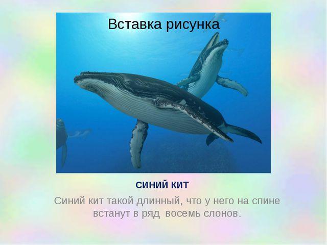 СИНИЙ КИТ Синий кит такой длинный, что у него на спине встанут в ряд восемь с...