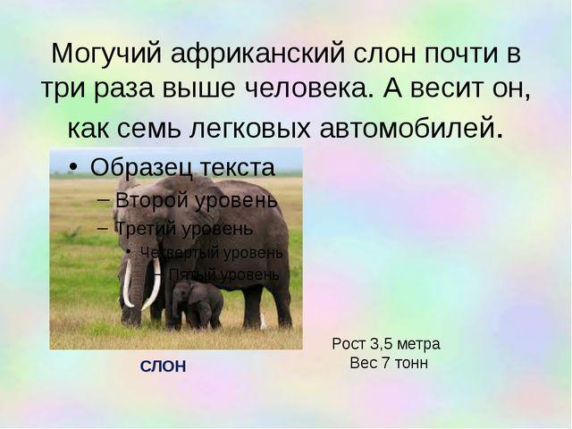 Могучий африканский слон почти в три раза выше человека. А весит он, как семь...