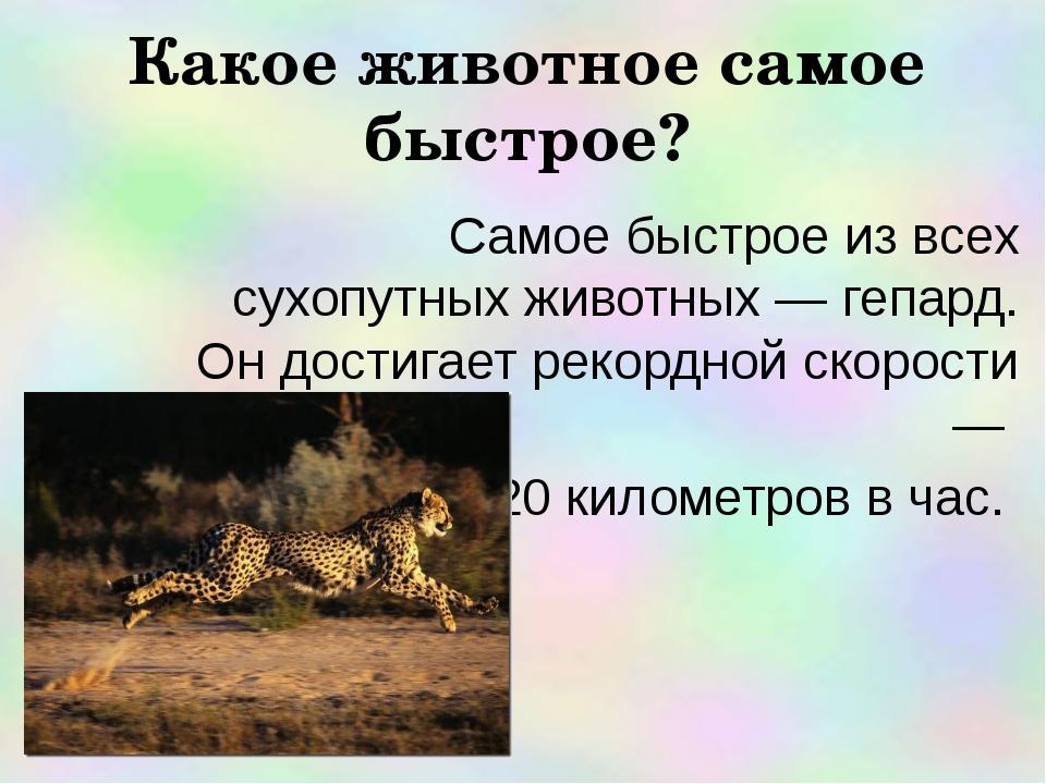 Какое животное самое быстрое? Самое быстрое из всех сухопутных животных — геп...