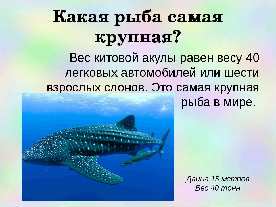 Какая рыба самая крупная? Вес китовой акулы равен весу 40 легковых автомобиле...