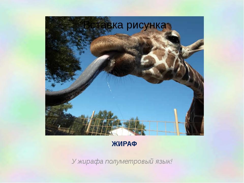 ЖИРАФ У жирафа полуметровый язык!