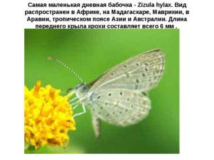 Самая маленькая дневная бабочка - Zizula hylax. Вид распространен в Африке, н