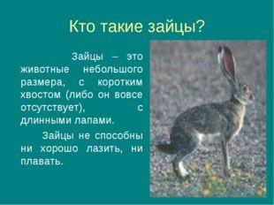 Кто такие зайцы? Зайцы – это животные небольшого размера, с коротким хвостом