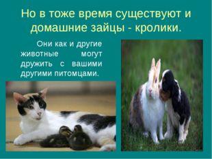 Но в тоже время существуют и домашние зайцы - кролики. Они как и другие живот