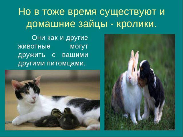 Но в тоже время существуют и домашние зайцы - кролики. Они как и другие живот...