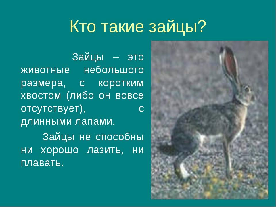 Кто такие зайцы? Зайцы – это животные небольшого размера, с коротким хвостом...