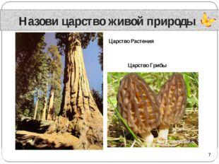 Назови царство живой природы Царство Растения Царство Грибы