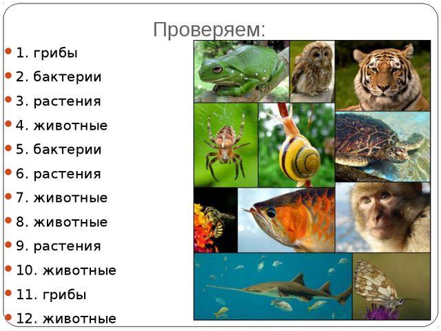Проверяем: 1. грибы 2. бактерии 3. растения 4. животные 5. бактерии 6. растен...