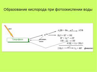 Образование кислорода при фотоокислении воды