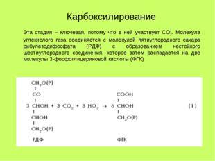 Эта стадия – ключевая, потому что в ней участвует СО2. Молекула углекислого г
