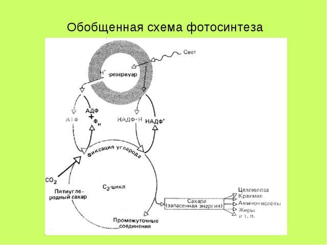 Обобщенная схема фотосинтеза