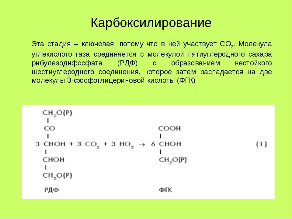 Эта стадия – ключевая, потому что в ней участвует СО2. Молекула углекислого г...