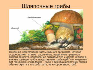 Шляпочные грибы Основная, вегетативная часть грибного организма, которая осущ
