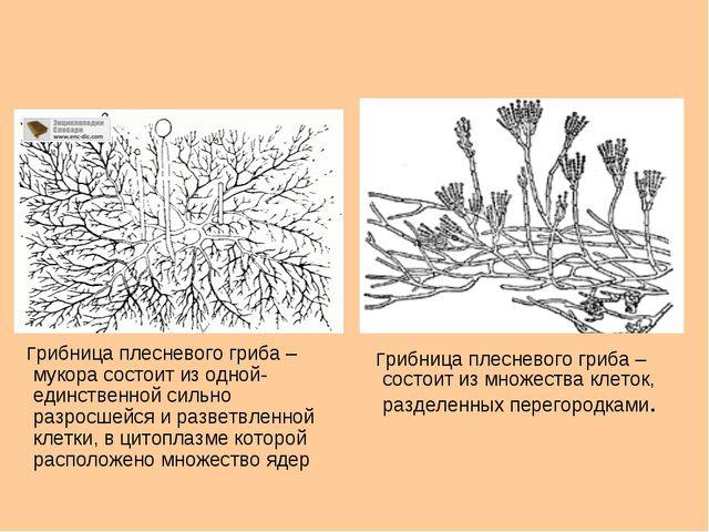 Грибница плесневого гриба – мукора состоит из одной-единственной сильно разр...