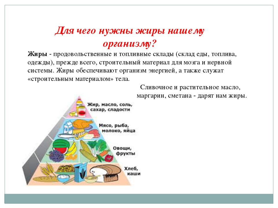 Для чего нужны жиры нашему организму? Жиры - продовольственные и топливные ск...
