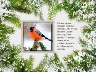 Самая яркая зимняя птичка — снегирь. Он очень пушистый и у него красная грудк