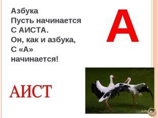 Азбука Пусть начинается С АИСТА. Он, как и азбука, С «А» начинается!