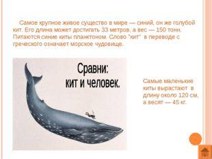 Самое крупное живое существо в мире — синий, он же голубой кит. Его длина мо
