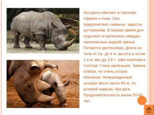 Носороги обитают в тропиках Африки и Азии. Они предпочитают саванны, заросли