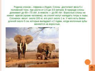 Родина слонов – Африка и Индия. Слоны достигают веса 5 с половиной тонн, при