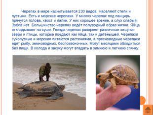 Черепах в мире насчитывается 230 видов. Населяют степи и пустыни. Есть и мор