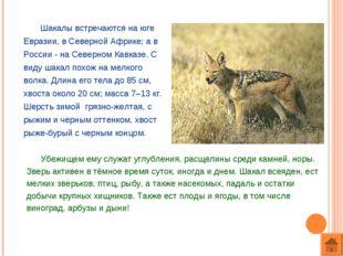 Шакалы встречаются на юге Евразии, в Северной Африке; а в России - на Северн