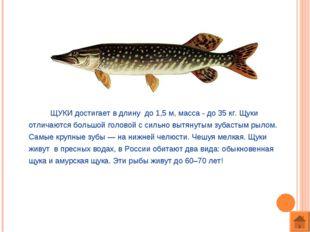 ЩУКИ достигает в длину до 1,5 м, масса - до 35 кг. Щуки отличаются большой г