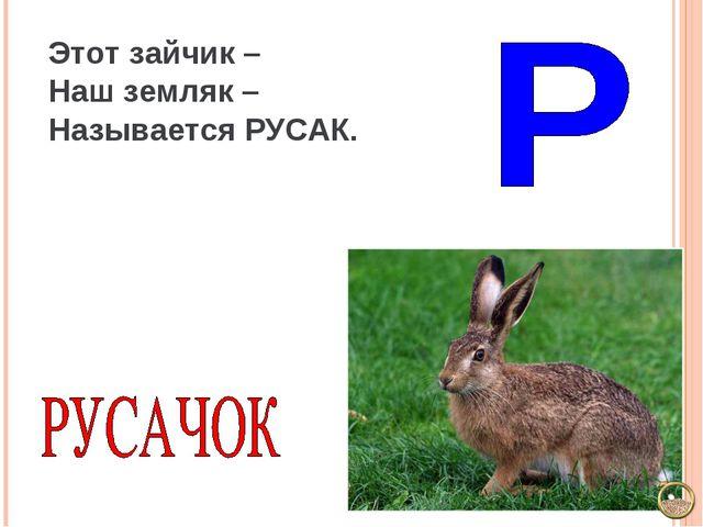 Этот зайчик – Наш земляк – Называется РУСАК.