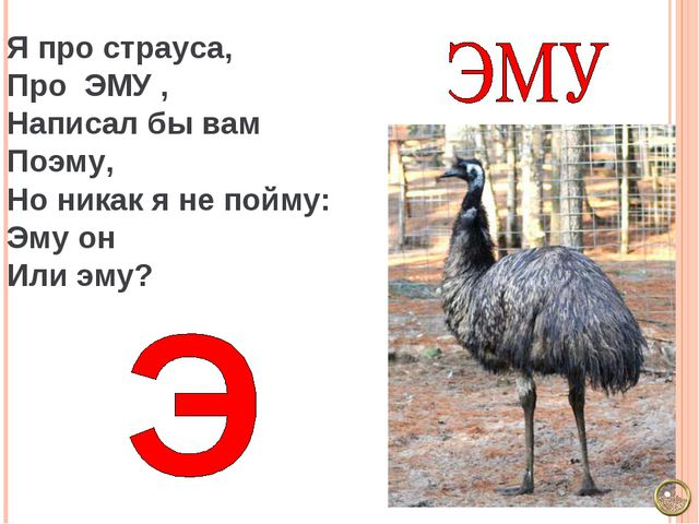 Я про страуса, Про ЭМУ , Написал бы вам Поэму, Но никак я не пойму: Эму он Ил...