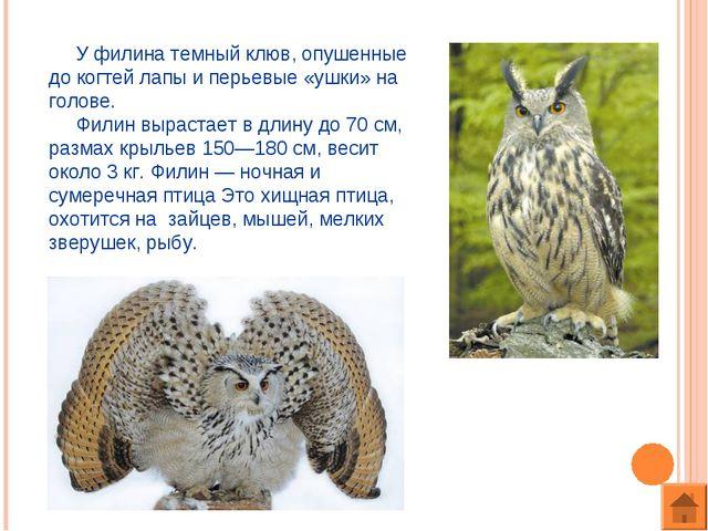 У филина темный клюв, опушенные до когтей лапы и перьевые «ушки» на голове....