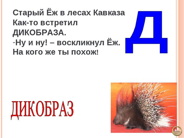 Старый Ёж в лесах Кавказа Как-то встретил ДИКОБРАЗА. Ну и ну! – воскликнул Ёж...