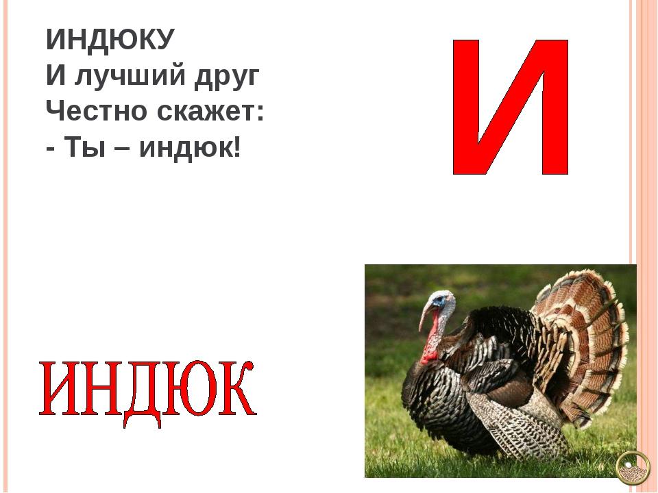 ИНДЮКУ И лучший друг Честно скажет: - Ты – индюк!