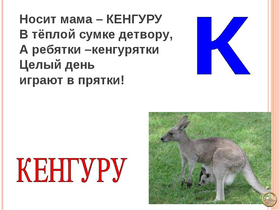 Носит мама – КЕНГУРУ В тёплой сумке детвору, А ребятки –кенгурятки Целый день...