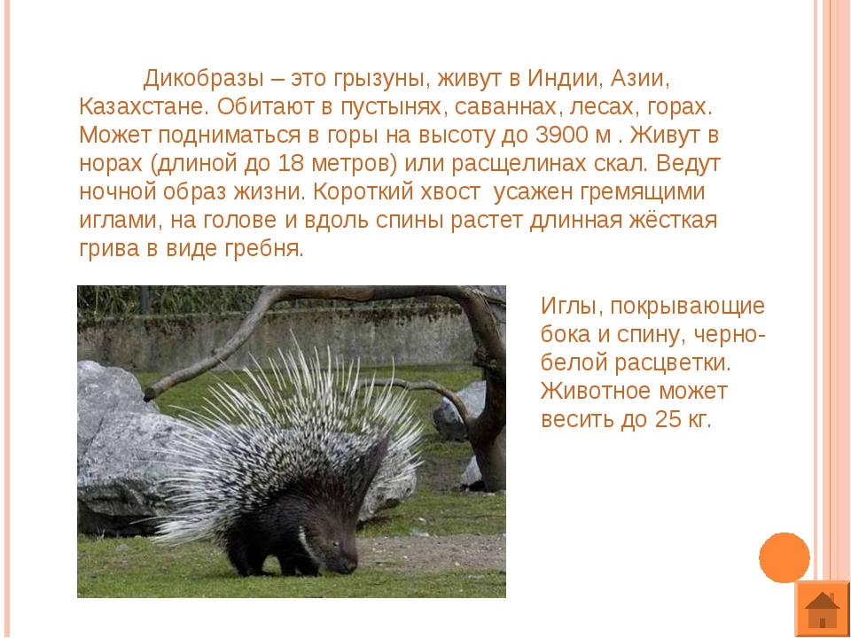 Дикобразы – это грызуны, живут в Индии, Азии, Казахстане. Обитают в пустынях...