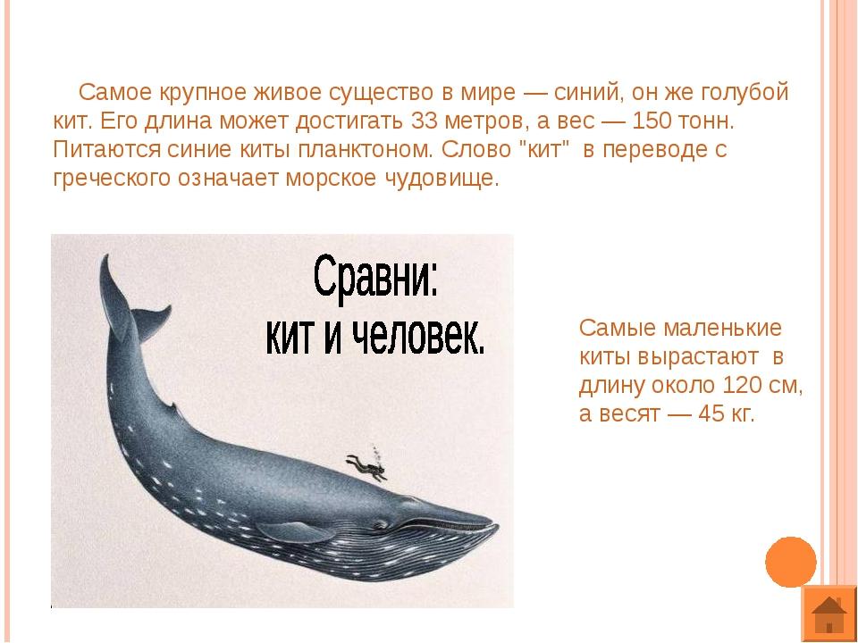Самое крупное живое существо в мире — синий, он же голубой кит. Его длина мо...