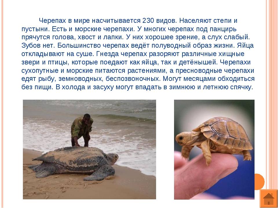 Черепах в мире насчитывается 230 видов. Населяют степи и пустыни. Есть и мор...