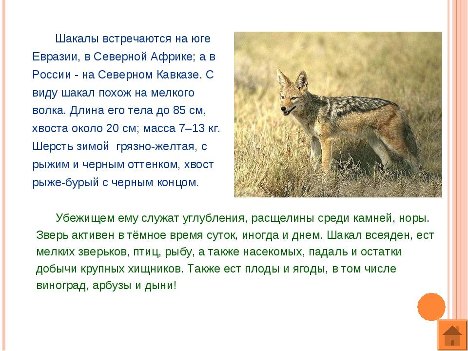 Шакалы встречаются на юге Евразии, в Северной Африке; а в России - на Северн...