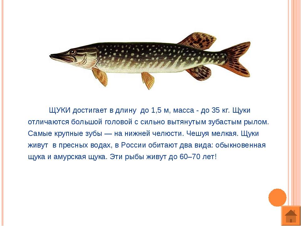 ЩУКИ достигает в длину до 1,5 м, масса - до 35 кг. Щуки отличаются большой г...
