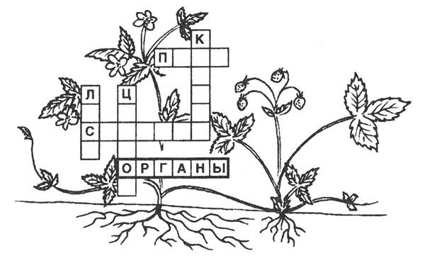 http://www.sakhalin.ru/boomerang/drevesnue/images/game/krossword/krossword%20(4).jpg