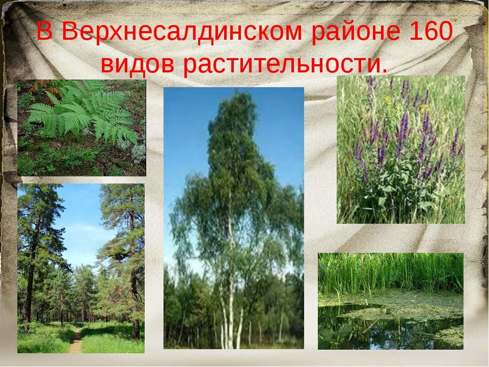 В Верхнесалдинском районе 160 видов растительности.