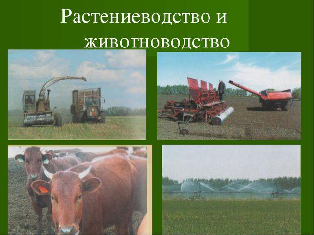 Растениеводство и животноводство