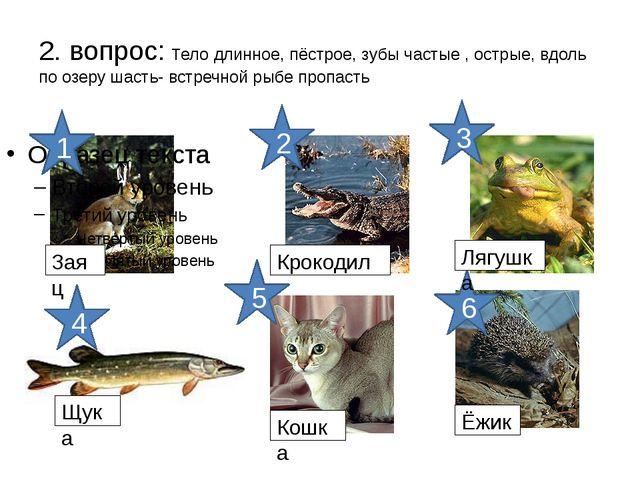 2. вопрос: Тело длинное, пёстрое, зубы частые , острые, вдоль по озеру шасть-...